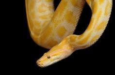 snake-1285354_1920